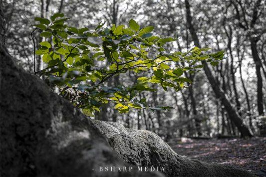 Een mooie tak groeit uit een bijzondere boom in het bos