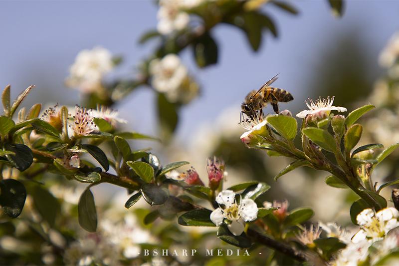 Bij op bloem | Copyright Bsharp Media