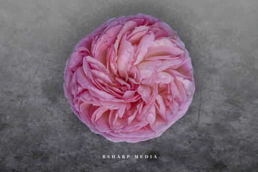 Roos | Copyright Bsharp Media
